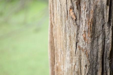 wooden pole texture Stock Photo