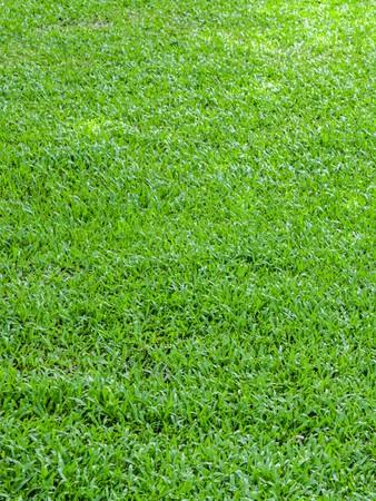 unwanted flora: green grass in garden