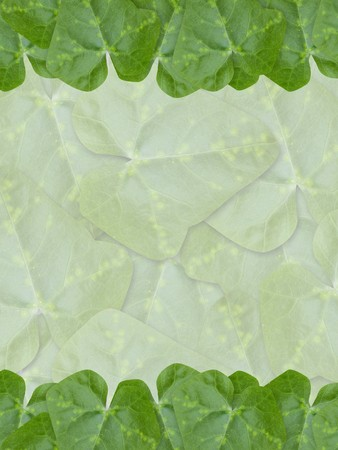 green Ivy Gourd leaves background