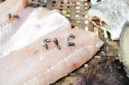 nilotica: fly on dry Nile tilapia salt fish