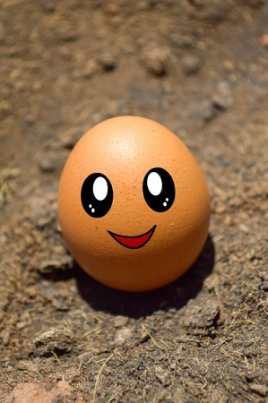 chicken and egg: cute Chicken egg on dry soil Stock Photo