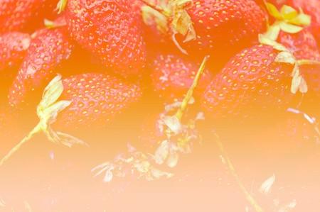 layout strawberry: art red strawberry background Stock Photo