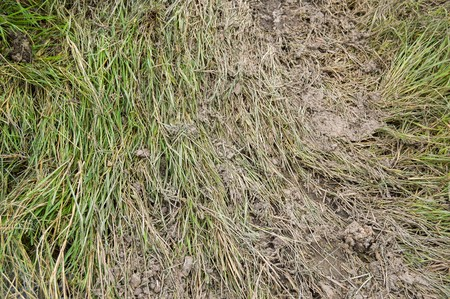 green grass with dry mud in garden