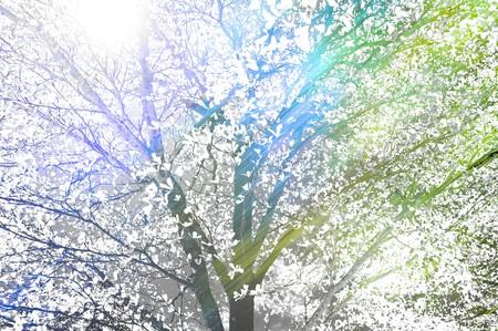 beautiful tree in garden