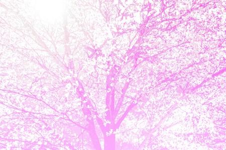 color tone: beautiful tree in garden  pink color tone