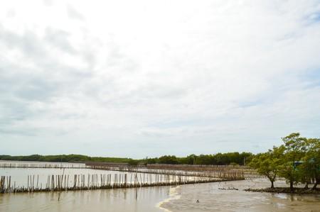chachoengsao: mangrove forest in bangpakong, Chachoengsao, Thailand