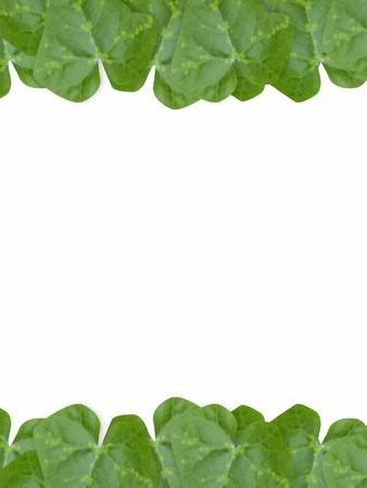 leaves frame: green leaves frame isolated Foto de archivo