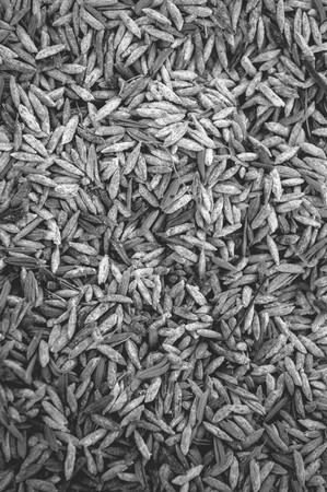 husk: rice paddy husk texture - black and white color tone Stock Photo