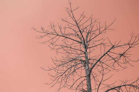 dry branch on brown color background