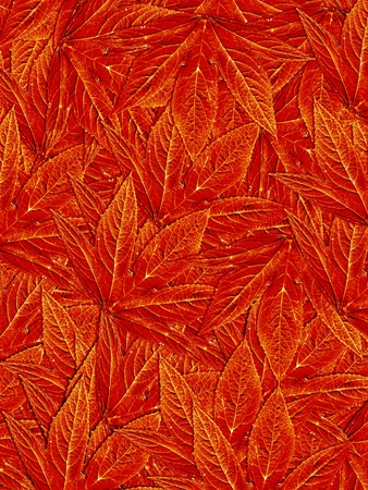 red leaves: red leaves pattern background Stock Photo