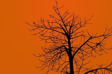 isolation: silhouette branch tree on brown background Stock Photo
