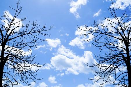 dry: dry branch on blue sky