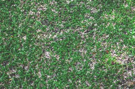 green grass in garden Stok Fotoğraf - 40819218