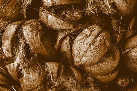 discard: coconut husk sepia color