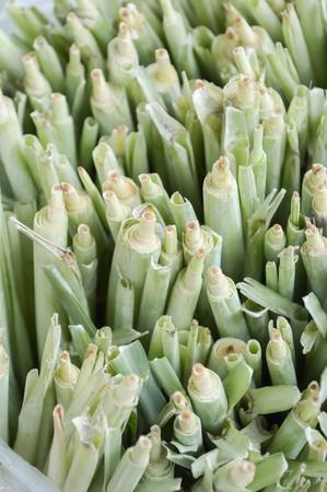 Lemongrass for agriculture  Cymbopogon citratus