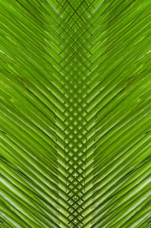 scabrous: art green abstract pattern texture background