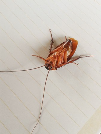 revolting: cockroach on paper