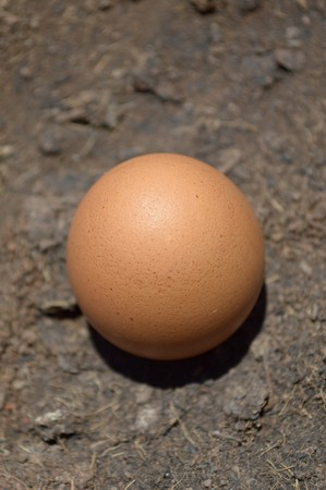 egg on the ground