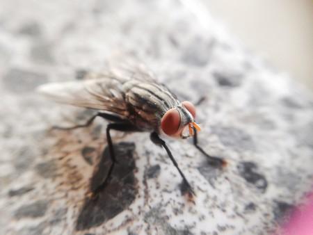 tiny fly macro Banco de Imagens - 42000229