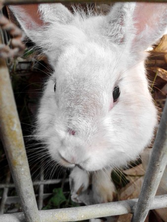rabbit in cage: rabbit in cage