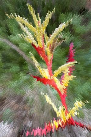 extrusion: art blocks heliconia flower illustration