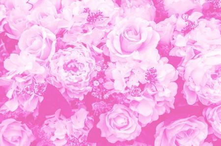rose flower - pink color tone Фото со стока