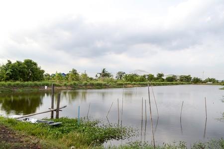 태국의 물고기 연못