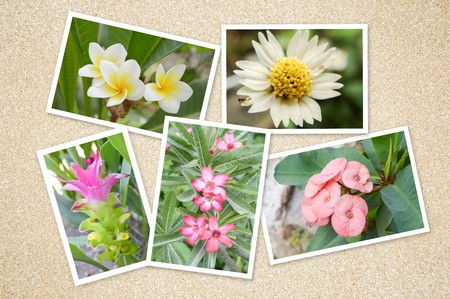 image flower background