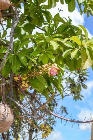 Sal tree in garden Stock fotó