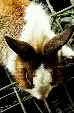 rabbit cage: Coniglio sveglio in gabbia