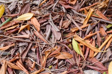 the dry leaves: Las hojas secas en el jard�n