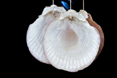 beautify: dry shell hanging on window