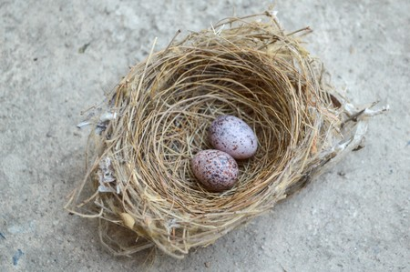 Bird nest with eggs on cement floor Stock Photo