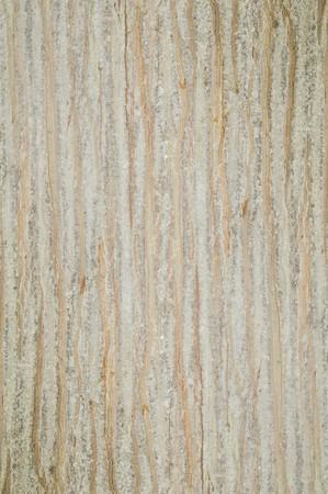 bark palm tree: bark palm tree texture