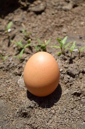 땅에 달걀