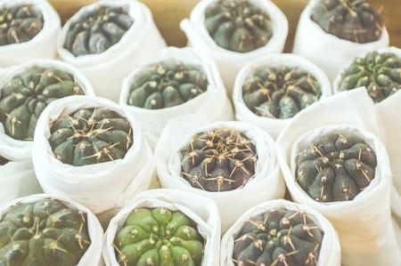 trees with thorns: cactus tree Stock Photo