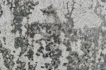 scabrous: grunge cement wall texture background