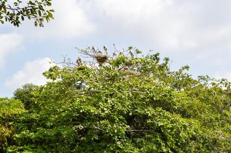 animal limb: bird nest on tree in garden Stock Photo