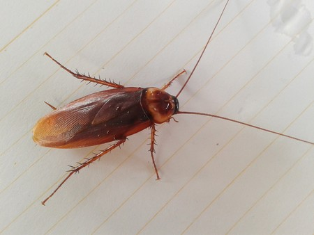 revolting: cockroach on white paper Stock Photo