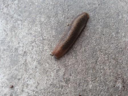mollusca: Slug on cement floor Stock Photo
