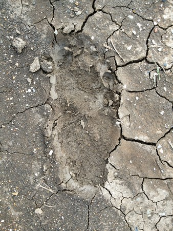 dirty feet: Footprint on the ground