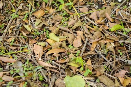 hojas secas: Las hojas secas en jardín de otoño