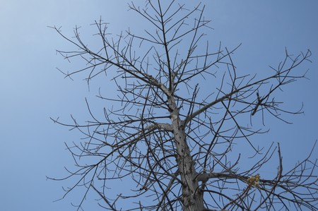 dry: dry branch dead tree on blue sky