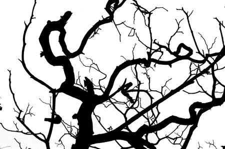 abstract branch silhouette