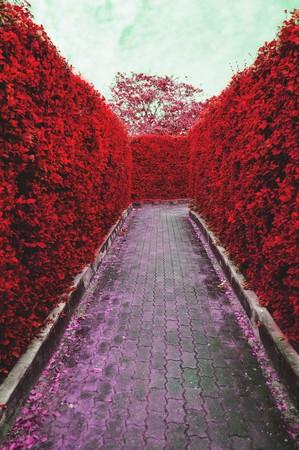 rode doolhof boom tuin