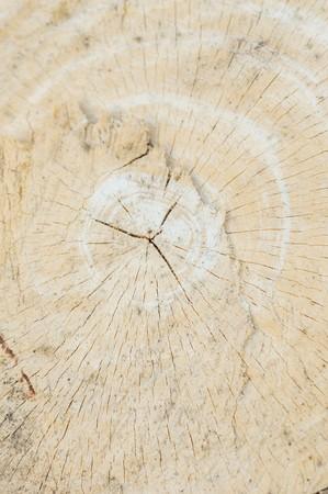 amputation: dry stump tree texture