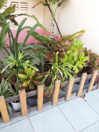 paling: plants garden