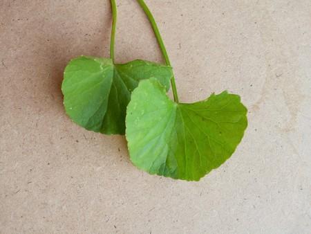 pisos de madera: centella asiatica hojas verdes en suelo de madera