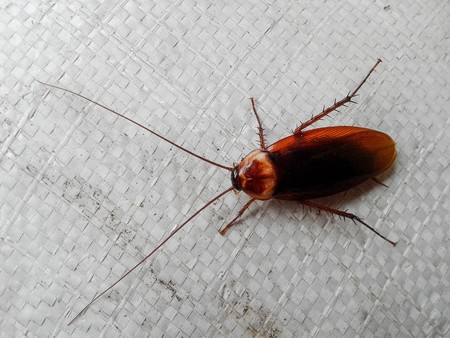 revolting: cockroach