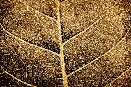 art grunge brown leaves texture